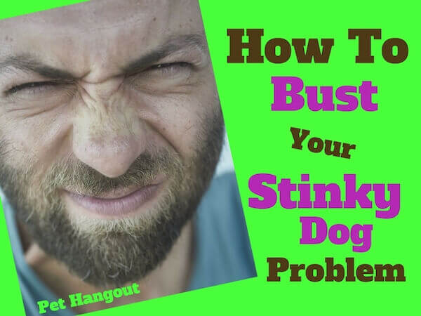 How to bust your stinky dog problem.
