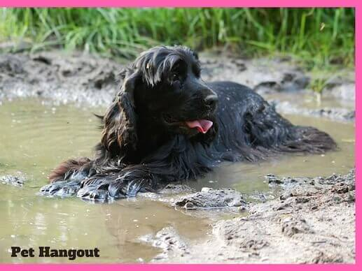 Dog laying in the mud.