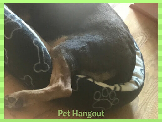 Stiff hind quarters could be a sign of hip dysplasia