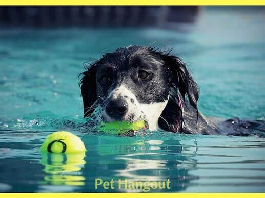 Swimming is great doggie exercise.