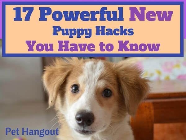 17 Powerful New Puppy hacks you have to know.