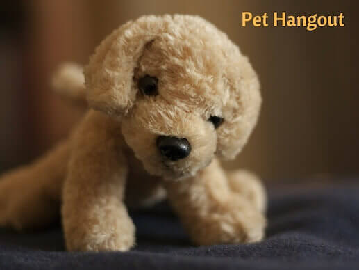 Your dog needs a stuffed toy to cuddle.