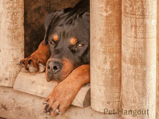 A hurt dog hideaways and heals.
