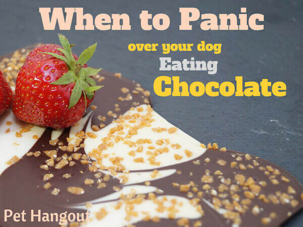 When to panic over your dog eating chocolate.