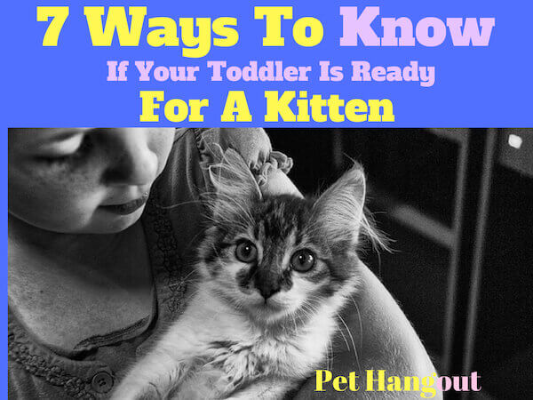 7 Ways to know if your toddler is ready for a kitten.