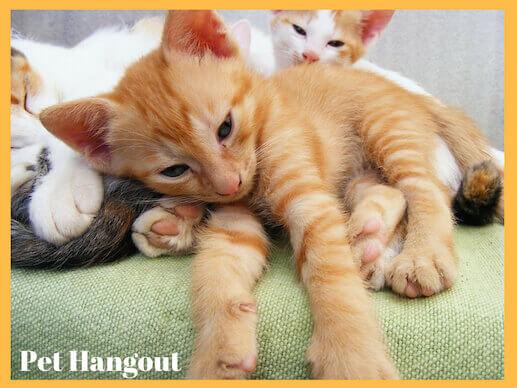 Kittens laying around.