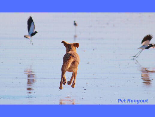 Chasing birds on the beach with your dog