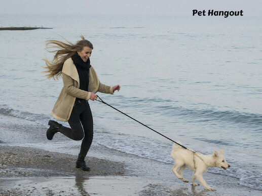 Jogging with your dog at the beach.