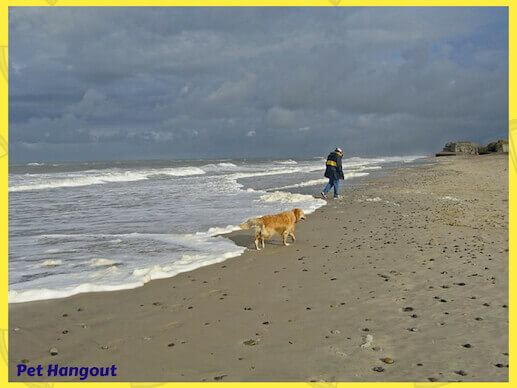 Looking for seashells on the beach with your dog.