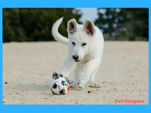 Playing ball at the beach with your dog