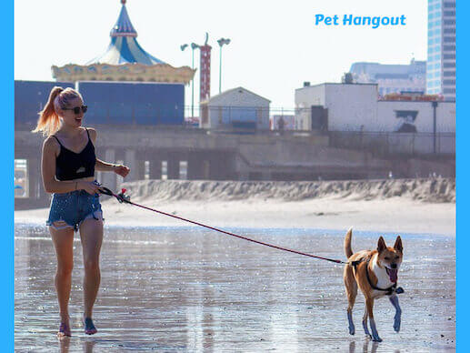 Walking on the beach with your dog