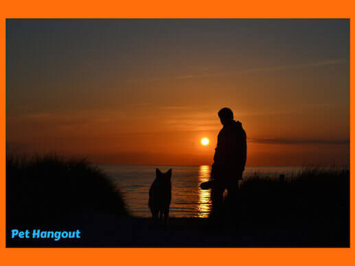 Watching a beach sunset with your dog.