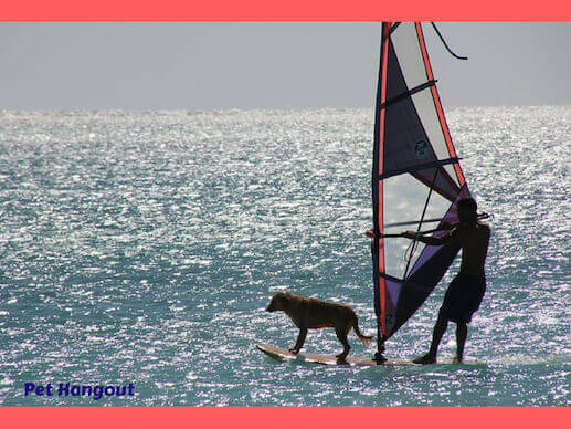 Windsurfing with your dog.