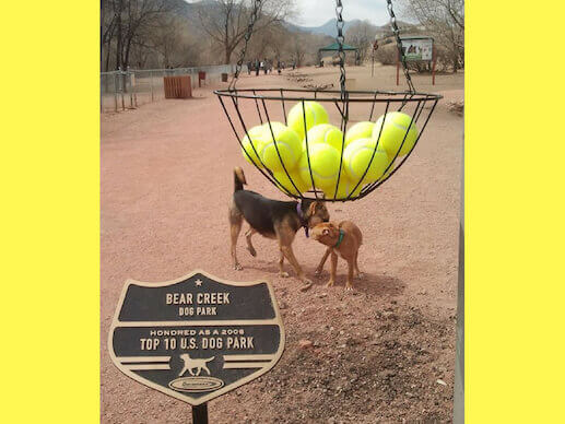 Tennis Ball attraction at Bear Creek Dog Park
