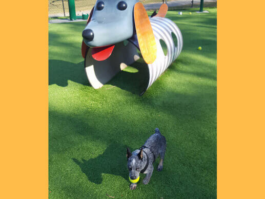 Playground doggie at Beau's Dream Dog Park