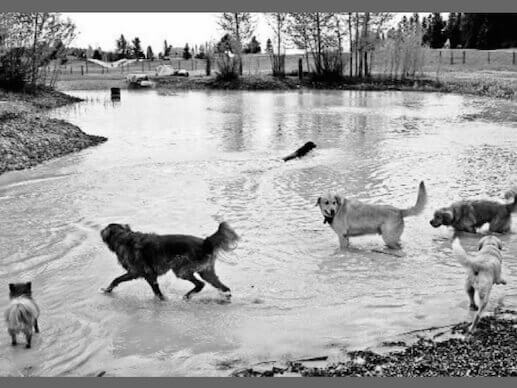 Dogs playing in the river at Hugh Rogers Dog Park