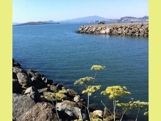 View at Point Isabel Regional Shoreline Dog Park.