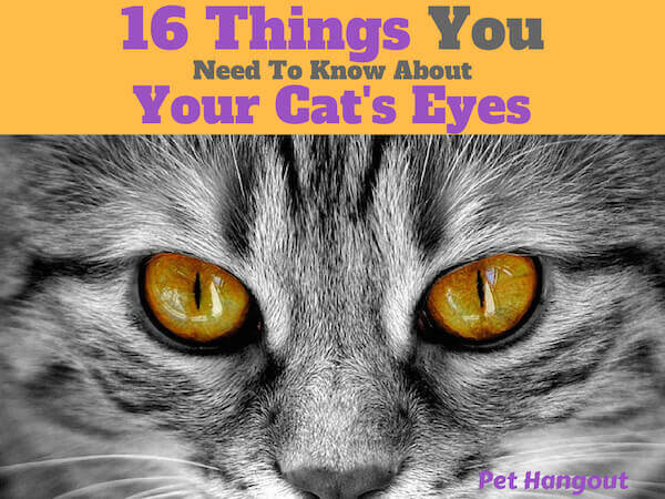 16 things you need to know about your cat's eyes.