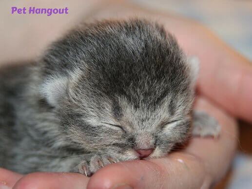 Newborn kittens eyes stay closed for a week.