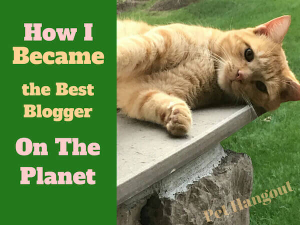 How I became the best blogger on the planet.