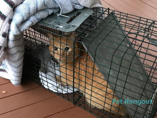Cheddar got trapped.