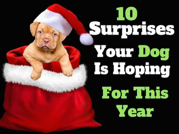 10 Surprises that your puppy is hoping for