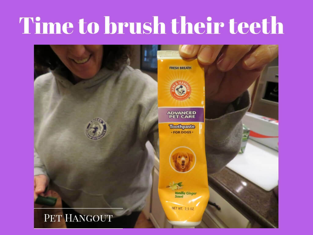 dog toothpaste for keeping your pups teeth clean
