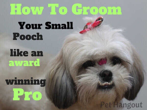 how to groom your small pooch like an award winning pro