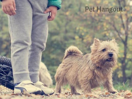 doggie walking with human