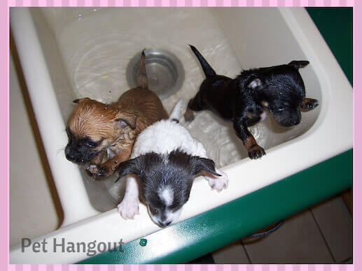 use a sink to bathe smaller dogs.