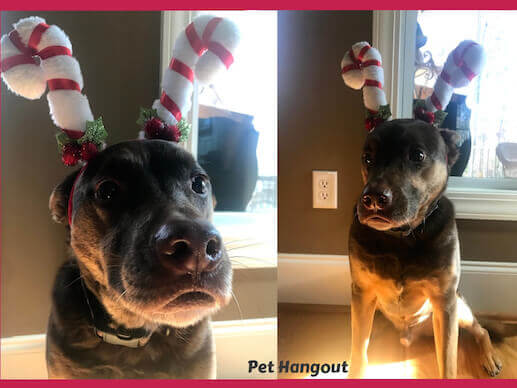 Drake with his candy cane ears.