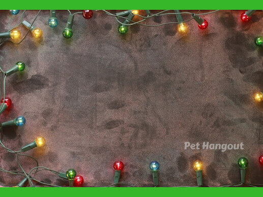 christmas lights can be dangerous to your pet.