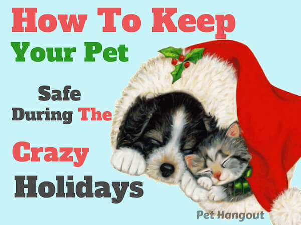 how to keep your pet safe during the crazy holidays.