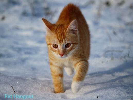 kitty snow pic 1