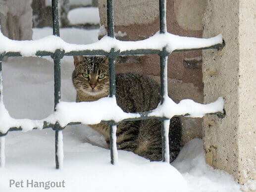 kitty snow pic 10