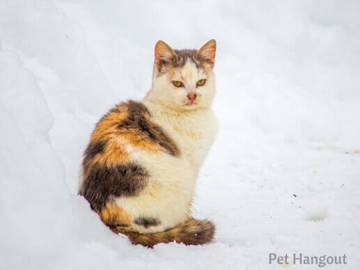 kitty snow pic 11