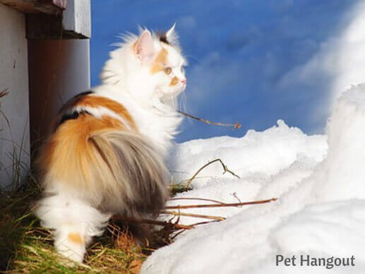 kitty snow pic 15
