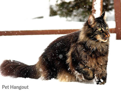 kitty snow pic 16