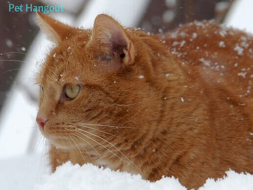 kitty snow pic 3