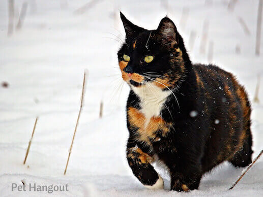 kitty snow pic 4