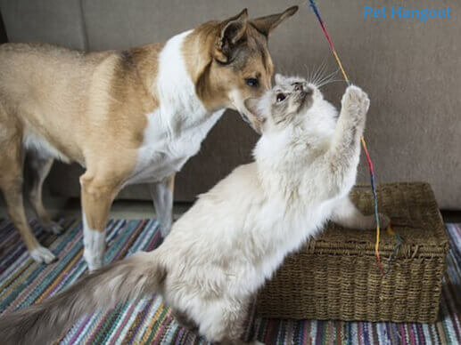 cat and dog playing with a string.