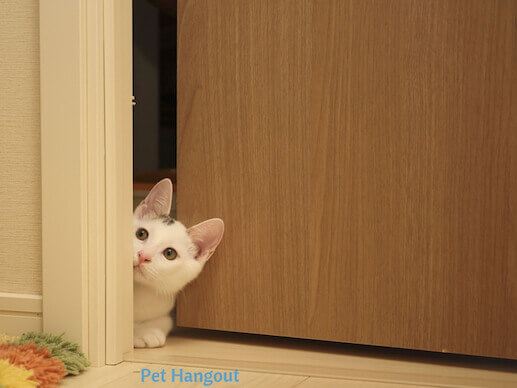 kitty sneaking inside of door.