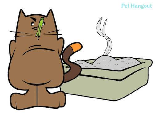 stinky kitty litter