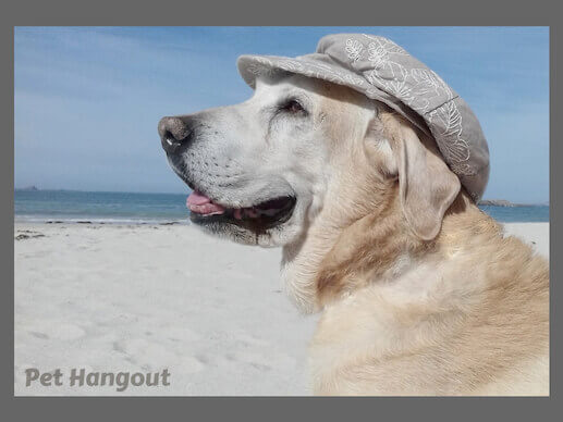 White Labrador on beach sheds.