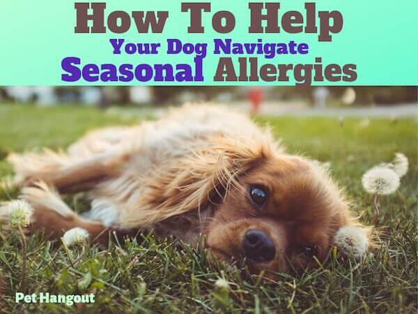 How to help your dog with seasonal allergies.