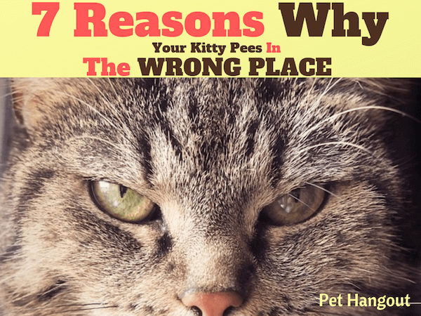 7 Reasons Why Your kitty is peeing in the wrong place.