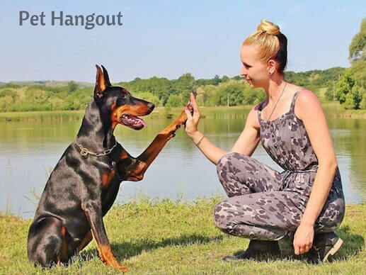 Doberman high fiving her human.