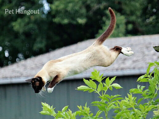 A cat's tail helps him land upright.