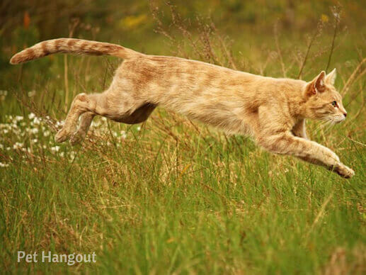 Cats can get airborne when running.