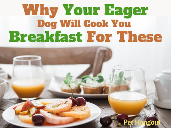 Why your dog will cook you breakfast for these.